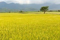 Paesaggio rurale dorato Immagini Stock Libere da Diritti