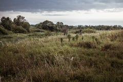 Paesaggio rurale durante la stagione di caccia con i cacciatori in erba alta nel campo rurale con il cielo drammatico durante il  Immagine Stock Libera da Diritti