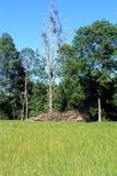 Paesaggio rurale in estate immagine stock