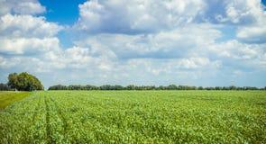 Paesaggio rurale in Europa Campo di frumento Fotografia Stock Libera da Diritti