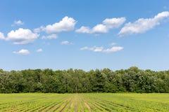 Paesaggio rurale - il raccolto rema la conduzione al cielo con le nuvole Immagini Stock Libere da Diritti