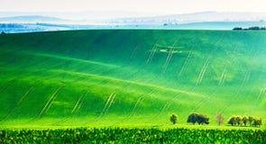 Paesaggio rurale naturale nel colore verde fotografia stock