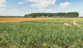 Paesaggio rurale nella stagione estiva Fotografie Stock
