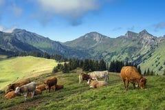 Paesaggio rurale nelle alpi svizzere Fotografia Stock