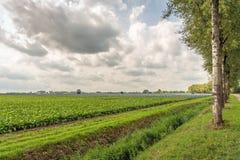Paesaggio rurale olandese pittoresco con l'agricoltura arabile fotografie stock