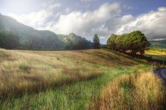 Paesaggio rurale pacifico in Azzorre, Portogallo fotografie stock
