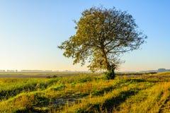 Paesaggio rurale pittoresco nella stagione di caduta con un albero Fotografia Stock Libera da Diritti