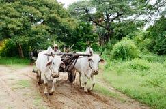 Paesaggio rurale stupefacente nel Myanmar Immagini Stock Libere da Diritti