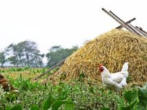Paesaggio rurale in Ucraina Immagine Stock