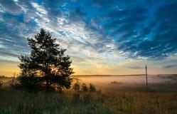 Paesaggio rustico di autunno Foschia dorata nel campo Fotografia Stock