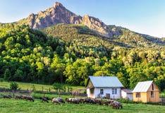 Paesaggio rustico scenico di vita pacifica della campagna con le pecore che pascono all'aperto su un picco di montagna di Caucaso Immagini Stock Libere da Diritti