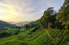 Paesaggio sbalorditivo del paesaggio al primo mattino dalla cima della collina e dalla piantagione di tè Fotografie Stock