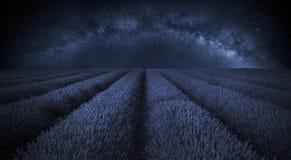 Paesaggio sbalorditivo del giacimento della lavanda con la chiara galassia della Via Lattea dentro Immagini Stock