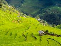 Paesaggio sbalorditivo del giacimento a terrazze del riso nelle montagne della MU Cang Chai, Vietnam del Nord Fotografia Stock