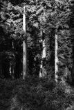 Paesaggio sbalorditivo della foresta di primo mattino in primavera con luce solare Fotografia Stock