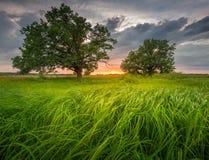 Paesaggio sbalorditivo di estate fotografia stock libera da diritti