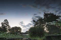 Paesaggio sbalorditivo di estate di alba sopra lo stagno perfettamente tranquillo di calma Immagine Stock