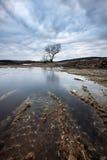 paesaggio Scena naturale di HDR con il lago e l'albero Immagini Stock