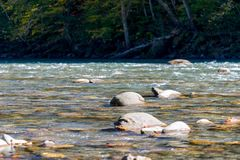 Paesaggio scenico con il bello fiume Autunno in mounta fotografie stock libere da diritti