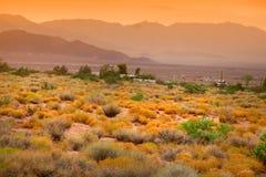 Paesaggio scenico del deserto Fotografia Stock Libera da Diritti