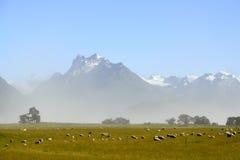 Paesaggio scenico della natura in NZ Fotografia Stock