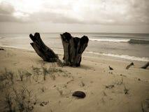 Paesaggio scenico della spiaggia Immagine Stock Libera da Diritti