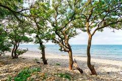 Paesaggio scenico della spiaggia pietrosa del mare con gli alberi alla costa di Mar Nero il giorno soleggiato Paesaggio della spi Immagine Stock Libera da Diritti