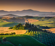 Paesaggio scenico della Toscana ad alba, dOrcia di Val, Italia Fotografia Stock