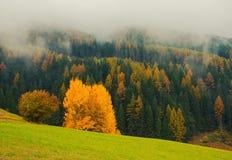 Paesaggio scenico di autunno nelle montagne con l'albero giallo, Alpe di Siusi, alpi della dolomia, Italia Fotografia Stock