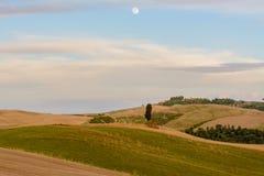 Paesaggio scenico di tramonto con l'albero di cipresso, le colline molli e la luna fotografie stock