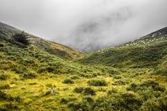 Paesaggio scenico in montagne nell'estate, paese basco, Francia di Iraty immagini stock libere da diritti