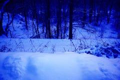 Paesaggio scenico nei toni blu, radura misteriosa di inverno della foresta con le colline nevose immagine stock libera da diritti
