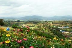 Paesaggio scenico sulle montagne, sul piccolo villaggio, sulle tende e su un campo dei crisantemi variopinti su priorità alta Fotografia Stock