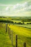 Paesaggio scozzese di estate, Lothians orientale, Scozia, Regno Unito Fotografia Stock Libera da Diritti