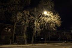 Paesaggio scuro e granuloso della via con i grandi alberi alla notte Fotografia Stock