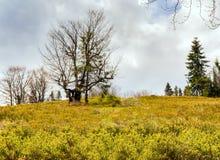 Paesaggio selvaggio della montagna Fotografia Stock Libera da Diritti
