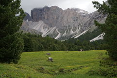 Paesaggio selvaggio nell'area di alta montagna Fotografie Stock Libere da Diritti
