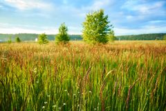 Paesaggio semplice di estate con il prato ed i giovani alberi fotografie stock