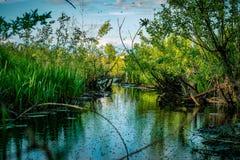 Paesaggio silenzioso di riflessione del fiume della palude selvaggia Riflessione della palude immagine stock