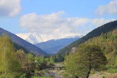 Paesaggio simmetrico con gli alberi verdi e neve all'orizzonte Fotografia Stock
