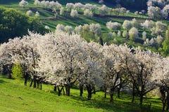 Paesaggio slovacco Immagini Stock Libere da Diritti