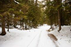 Paesaggio slovacco delle montagne di Belianske Tatry fotografie stock libere da diritti