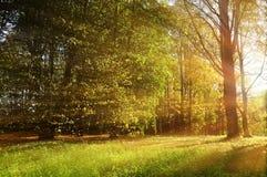 Paesaggio soleggiato della foresta di autunno - alberi e raggi di sole di autunno della foresta che splendono attraverso gli albe Immagini Stock Libere da Diritti