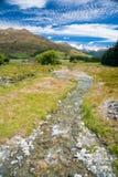 Paesaggio soleggiato della Nuova Zelanda di estate Fotografie Stock