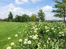 Paesaggio soleggiato della primavera con il prato verde fotografia stock
