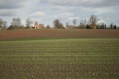 Paesaggio soleggiato di autunno con grano verde che cresce nel campo Immagini Stock