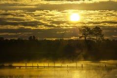 Paesaggio soleggiato di mattina nebbiosa Immagine Stock