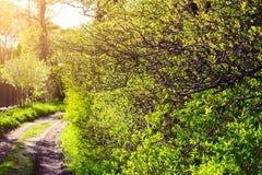 Paesaggio soleggiato durante il tramonto, sentiero forestale della campagna di estate Fotografia Stock Libera da Diritti