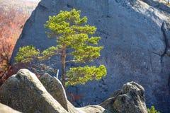 Paesaggio solo della montagna dell'albero di abete Immagine Stock