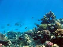 Paesaggio sotto acqua fotografie stock